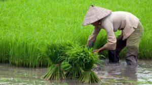 Read more about the article Bertani dan Bercocok Tanam, Ini Pahalanya