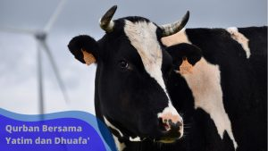 Read more about the article ingin berqurban tahun ini, cek harga hewan yayasan rahmatan lil-alamin berikut ini