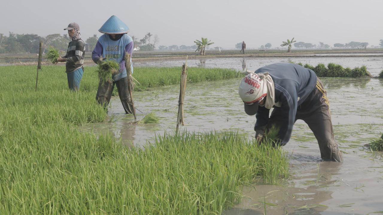Read more about the article Hadirkan Kedaulatan Pangan dengan Wakaf Pertanian