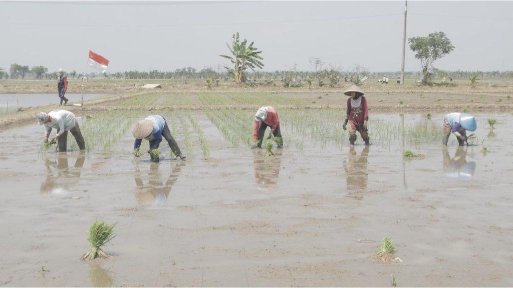 Wakaf Lahan Pertanian